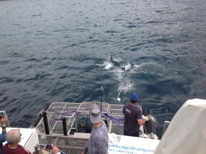 Shark cage diving in South Australia - possibly the most exhilarating thing you'll ever do!