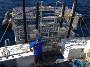 Calypso Star shark cage diving at the Neptune Islands
