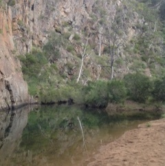 The oasis of Needles Beach at Werribee Gorge.