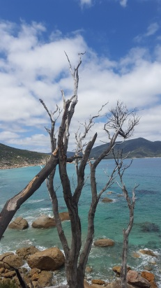 Looking out over the Listerine-coloured waters of Little Oberon Bay.