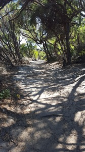 Tea trees line the track heading to the southern end of Norman Beach.