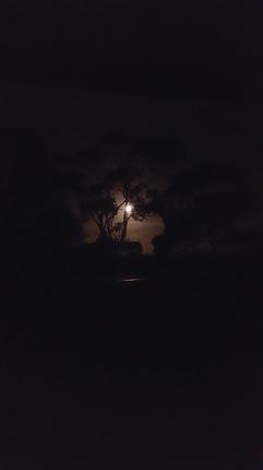 Yanakie by moonlight.