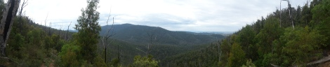 Panoramic view over the tree canopy of the forest on the Boroondara Track and the surrounding mountain range.