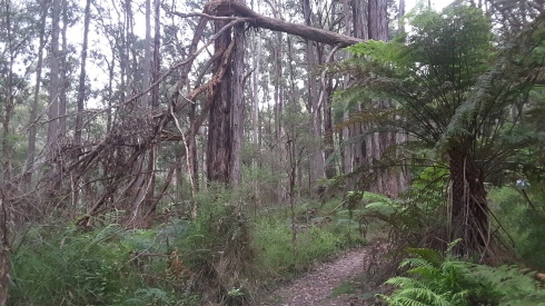 The last leg on Tree Fern Track.