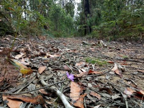 A splash of purple flora along the Boroondara Track.
