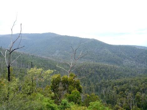 Overlooking the treetops and the surrounding mountain range of the Murrindindi Scenic Reserve.