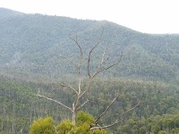 Looking out over the Murrindindi Scenice Reserve in the Toolangi State Forest, Victoria