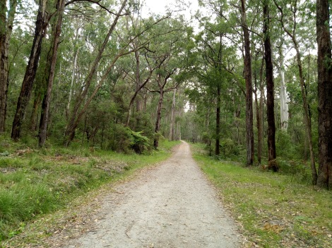 Leaving the Mortimer Picnic Ground and heading up the Triangle Track in the Bunyip State Park.