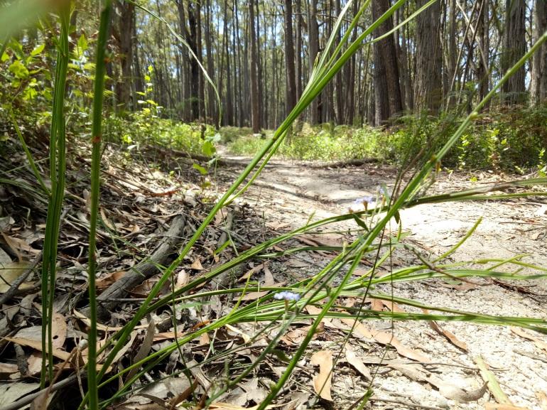 Silvertop Ridge Track in Bunyip State Park.